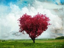bible heart tree