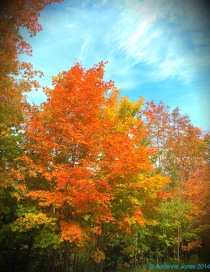 Fall In its Glory